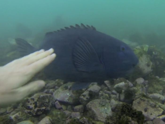 "Valo ""Maneuver Mondays"" – Gavin Drumm Swimmin with the Fishies"